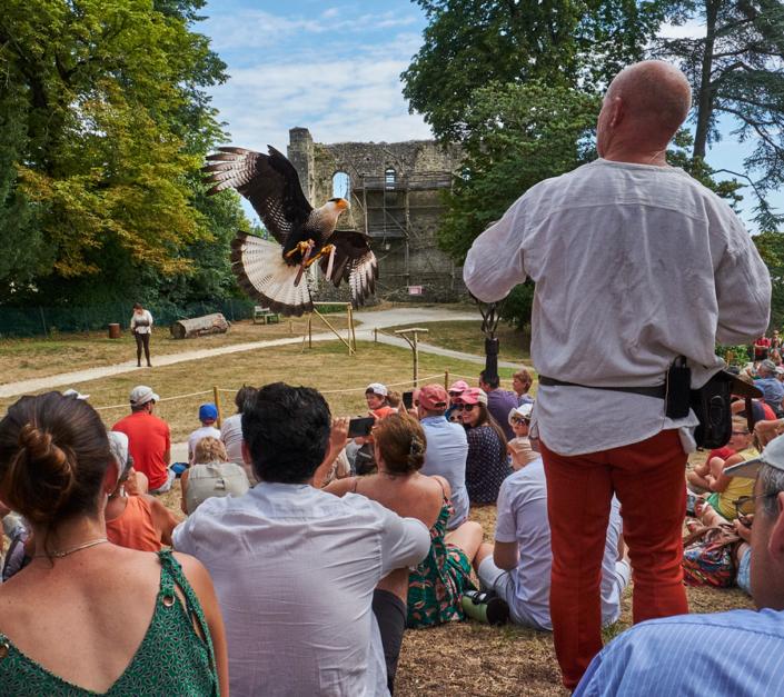 Spectacle de rapaces au château de Langeais