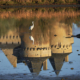 château de Suscinio bretagne